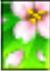 greenblossom.png